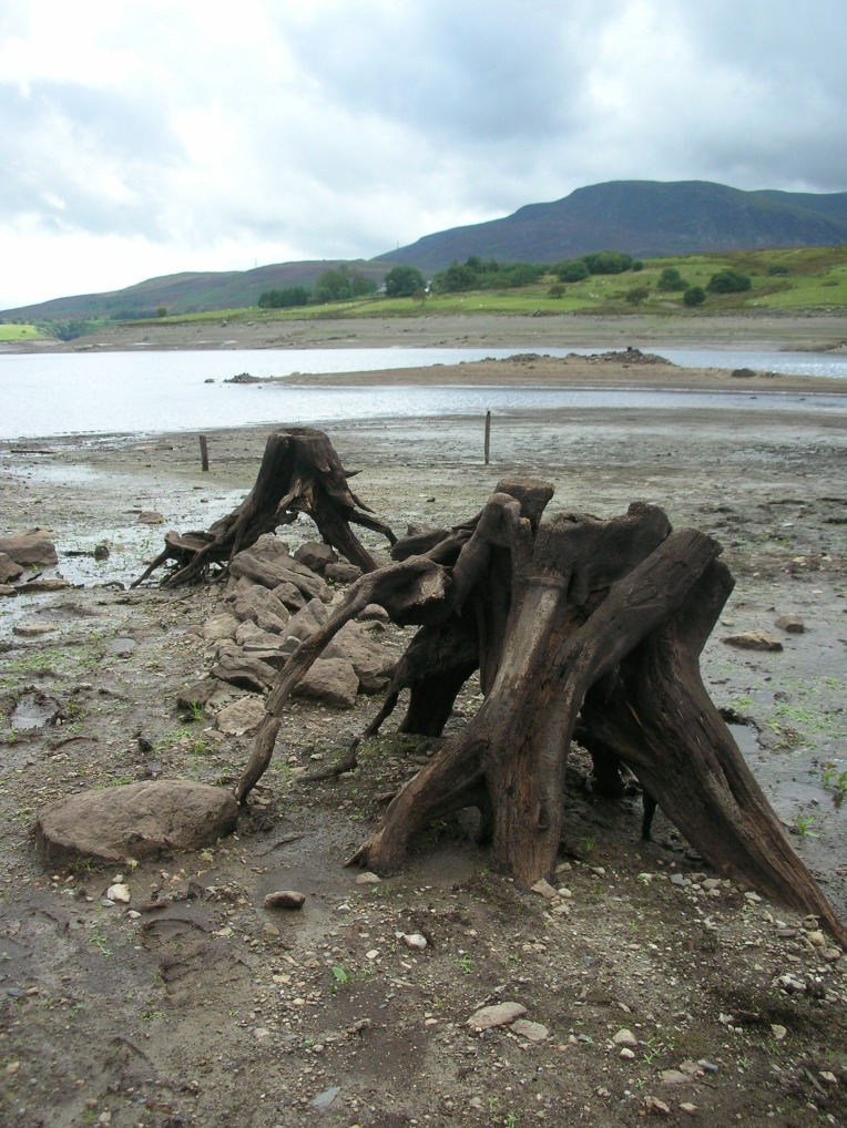 capel_celyn_exposed_tree_stumps